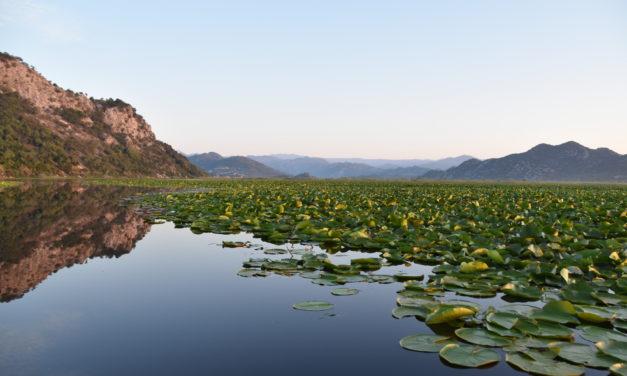 Monténégro – Le verdoyant lac de Skadar