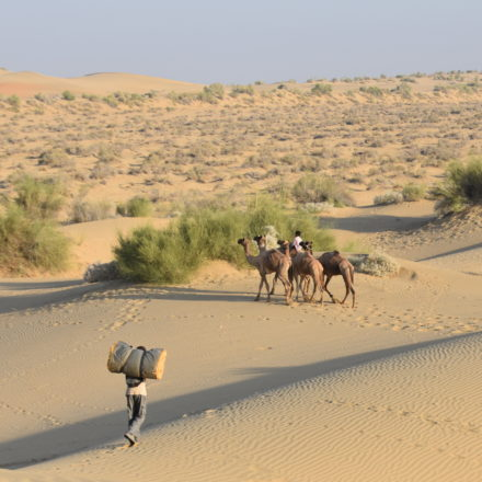 Jaisalmer et désert du Thar