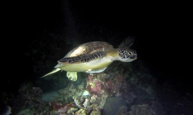 Une semaine à Moalboal – le paradis des tortues