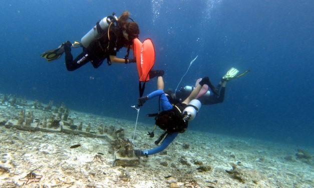 Un mois de conservation marine