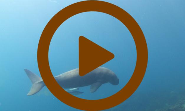 Vidéo – Plongée aux Philippines