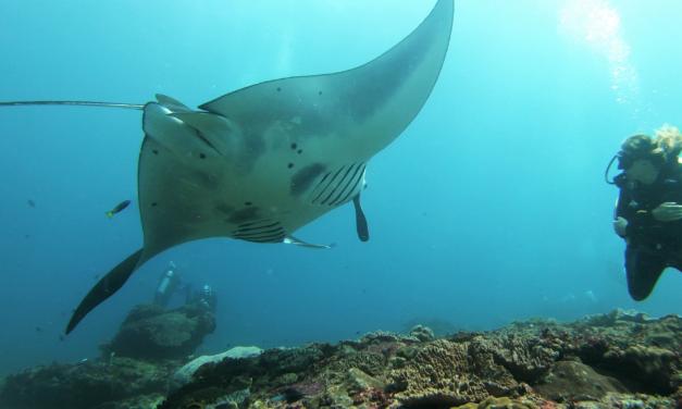 Plongées merveilleuses à Komodo, et douceur de vivre à Nusa Penida
