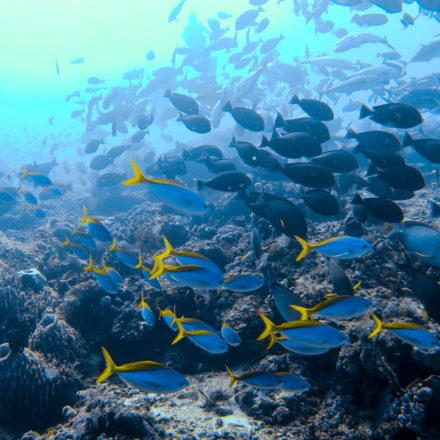 Plongée à Komodo et l'île de Nusa Penida