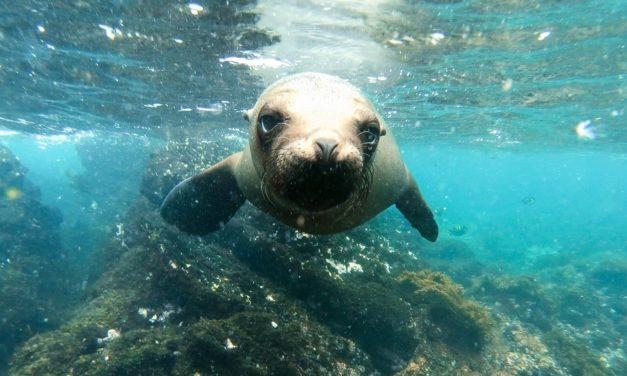 Galápagos, le pays des merveilles